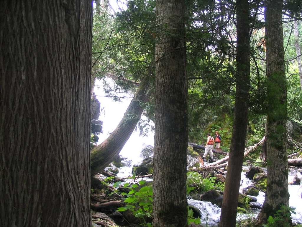 Eddy Falls through trees