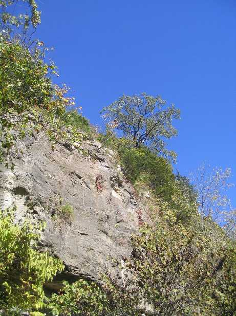 Tree on bluff