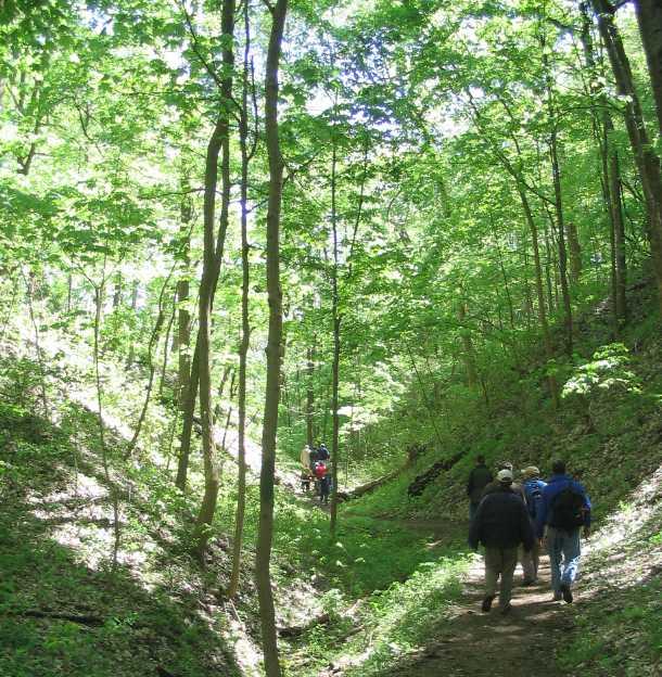 http://www.funmurphys.com/photos/blog/scouts/trail_ravine2.jpg
